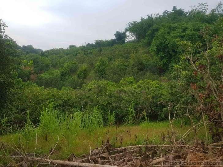 ンゴ果樹園がこんなに広がっているとは知らなかった