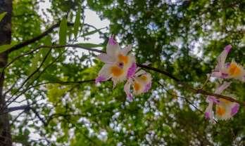 パトゥン登山2回目、宿り花