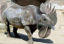 ilginc-hayvanlar