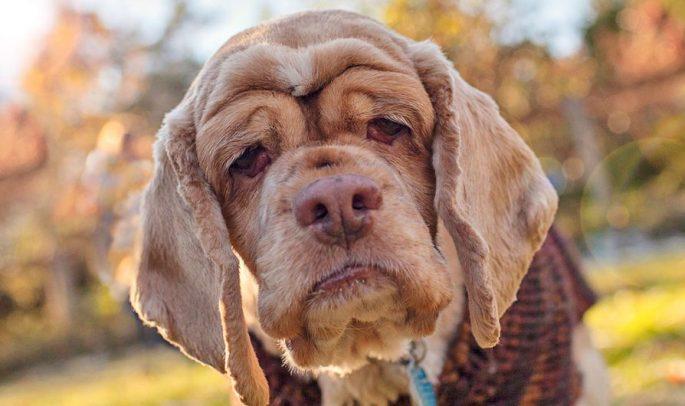 Köpek Sahipleneceklerin Bilmesi Gerekenler