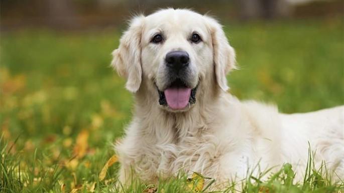 Köpeğinizi Sakinleştirmek İçin 8 Doğal Yöntem