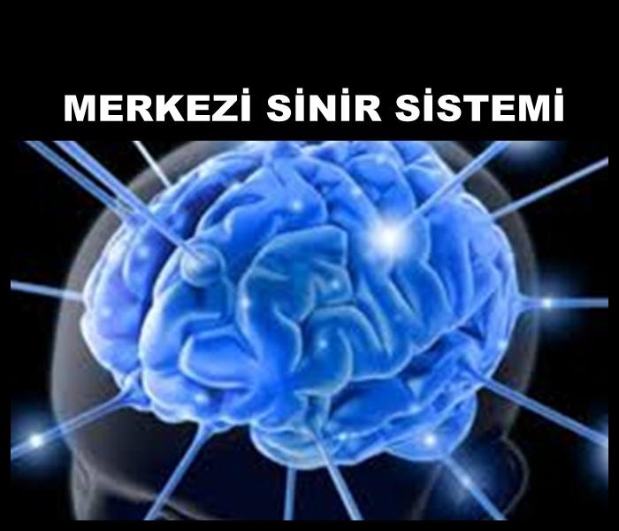 OMURİLİK Merkezi Sinir Sistemi Nasıldır?