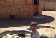 Zim Family Keep 62 Metre SNAKES AS HOUSE PETS - SEE PHOTOS as son plays with the snakes