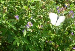 Ein Schmetterling entführt auf eine Fantasiereise