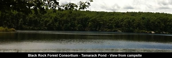 Tamarack Pond - view from campsite