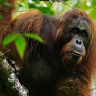 Experience the best of Borneo