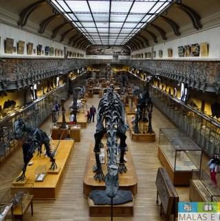 Galeria de Anatomia Comparada e Paleontologia – Museu de História Natural de Paris