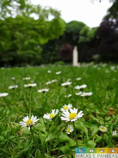 flores no Jardim de Luxemburgo