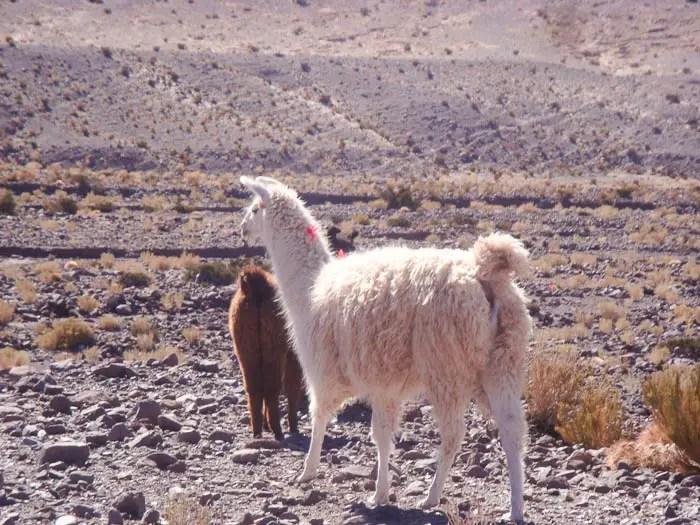 Na estrada para o Valle Arcoiris - tablet pra quê?