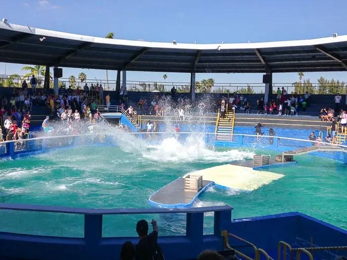 miami seaquarium orca