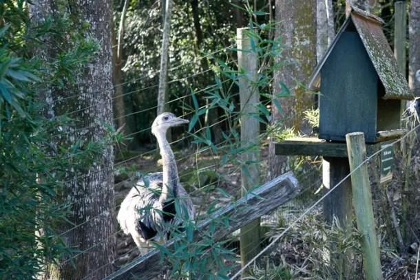 gramado zoo-18