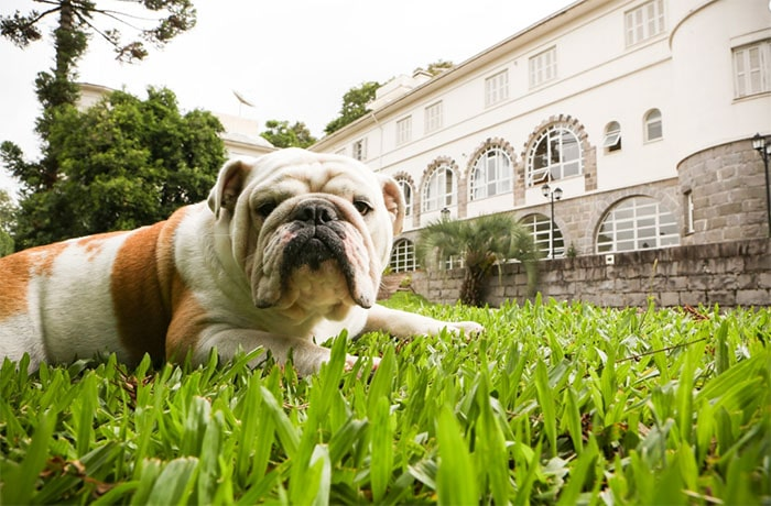 hotel pet friendly na serra gaucha