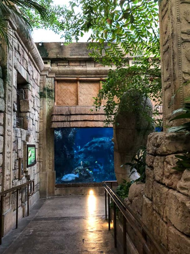Shark Reef at Mandalay Bay