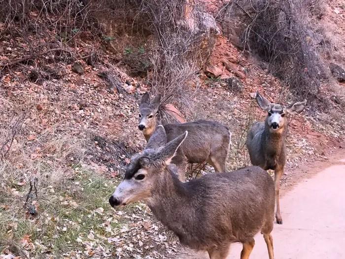Riverside Walk | Zion National Park