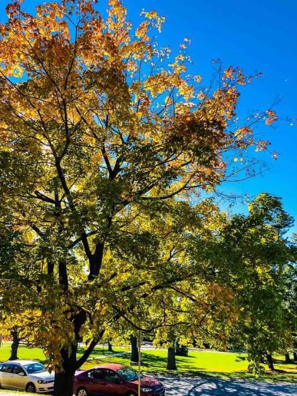 Foliage em Burlington