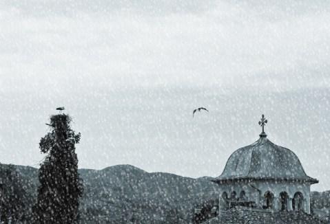 stork1.1