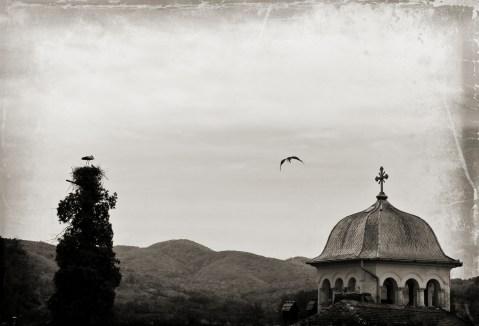 stork1.2
