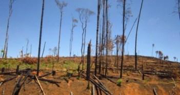 trees malawi