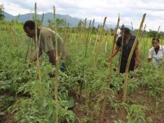 Malawi Social Enterprise