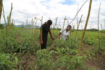Farming is big business in Diamphwe