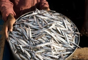Fish farming  could help Malawi. Image credit (www.africanfarming.net)