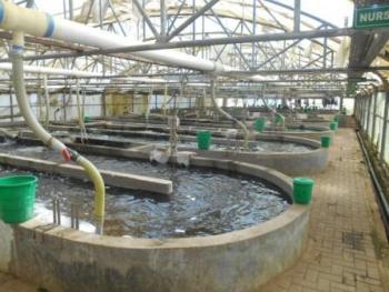 Chambo Fisheries