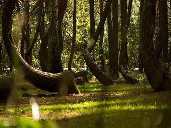 crookedforest6 1600158914