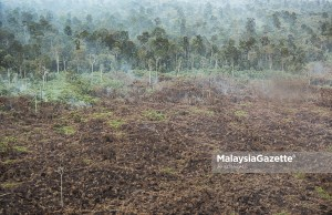 earth Wildfires in the forest reserve at Kuala Langat Selatan, Banting, Selangor. PIX: AFIQ RAZALI / MalaysiaGazette / 23 APRIL 2020 climate change environment