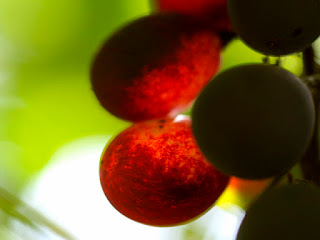 """Grapes of Light."" October 6, 2007. Photo by Maria Yu. From Flickr."