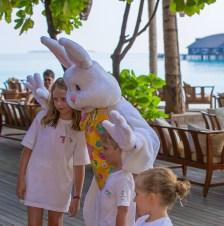 bunny (9 of 10)