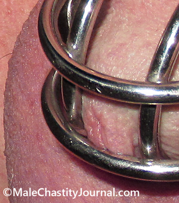urethra poking out of a male chastity device