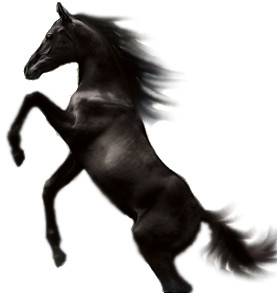 Black Stallion Image
