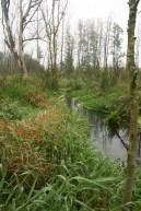 Rzeka Młyńska. Woj. świętokrzyskie.