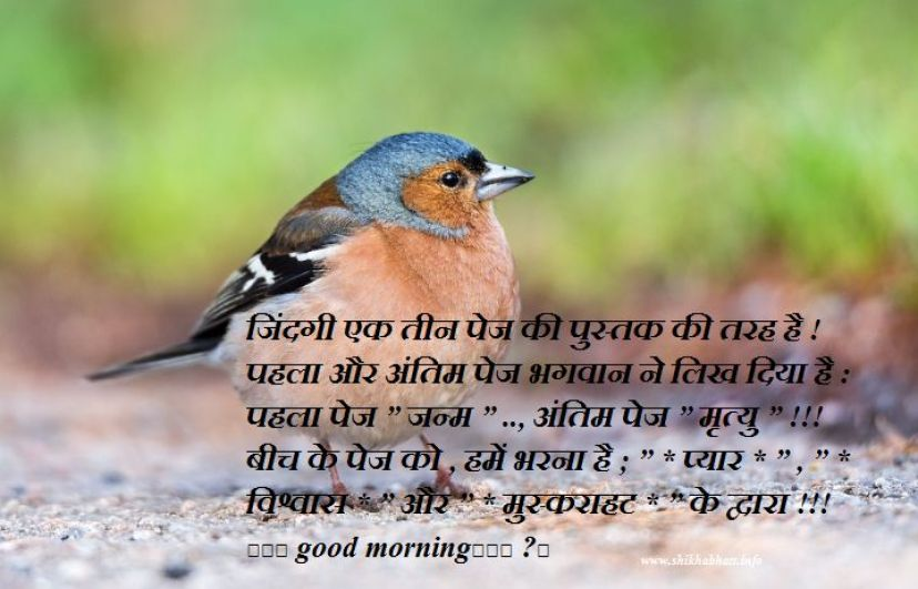 good mornind shayari