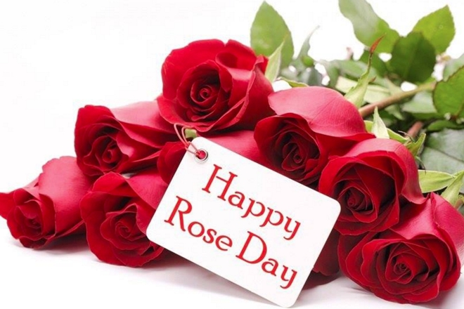 Rose Day Beautiful Shayari Hd Wallpaper