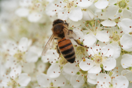 Manuka Honey for Healing - MALIBU MAMA LOVES