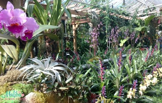Our Marie Selby Botanical Gardens Experience - MALIBU MAMA LOVES