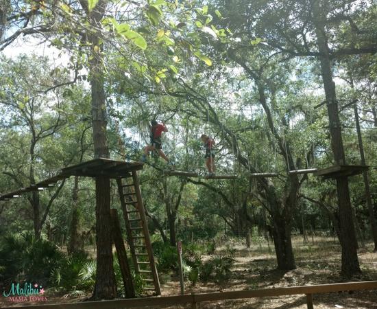 TreeUmph Adventure Course
