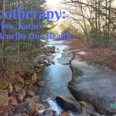 Ecotherapy: How Nature Benefits Our Health