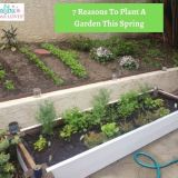 7 Reasons To Plant A Garden This Spring