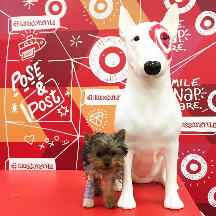 cyber-monday-cute-puppy-target-dog-by-keepingupwithgatsby-11-28-2016-6