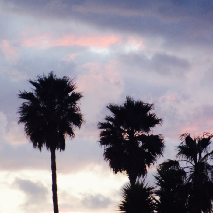 Sunset, Palm Trees, and Cotton Candy Clouds