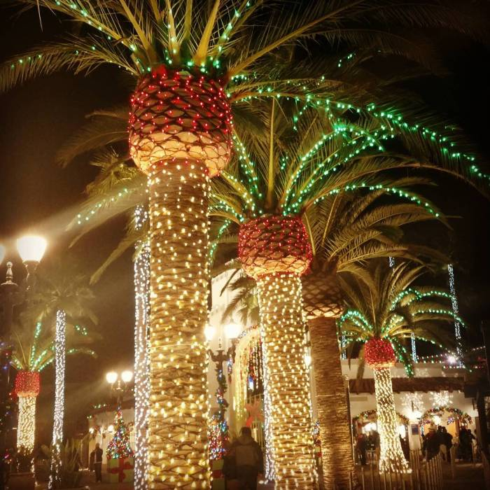 California Christmas Palm Trees at Universal Studios Hollywood