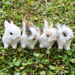Realistic Mini Bunnies Lifelike Rabbits Plush Fur Animal Easter Bunny Decor