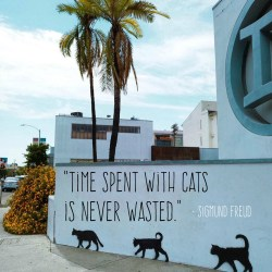 """""""Time Spent with Cats is Never Wasted."""" – Sigmund Freud"""