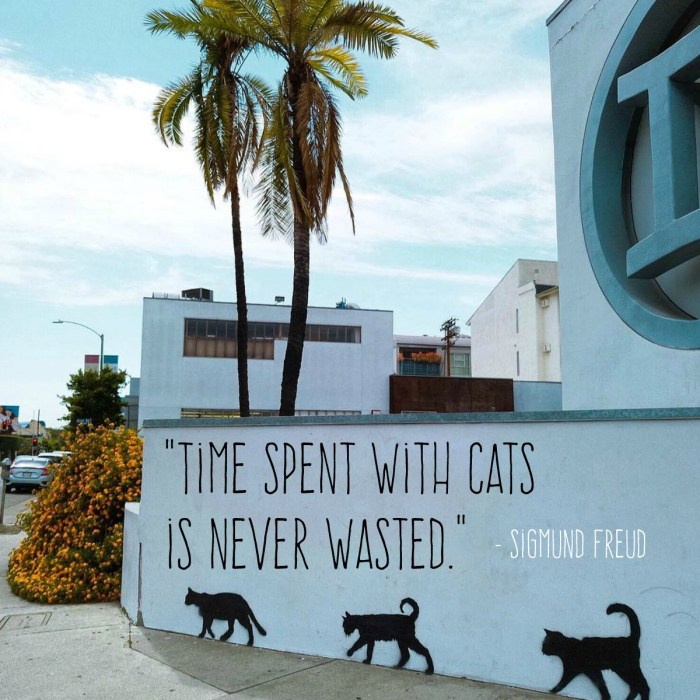 """Time Spent with Cats is Never Wasted."" – Sigmund Freud"
