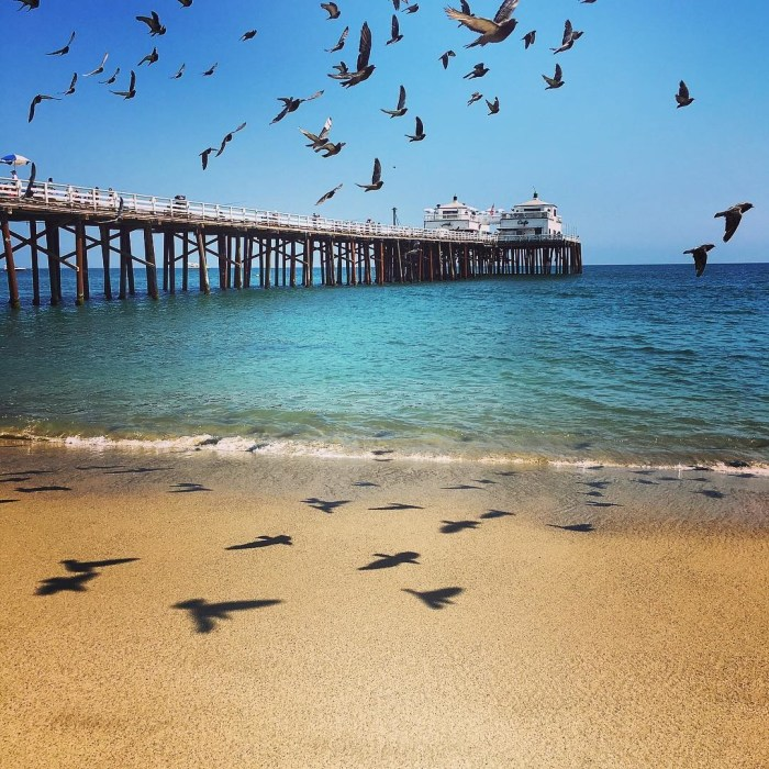 Swarm of Birds at the Malibu Pier