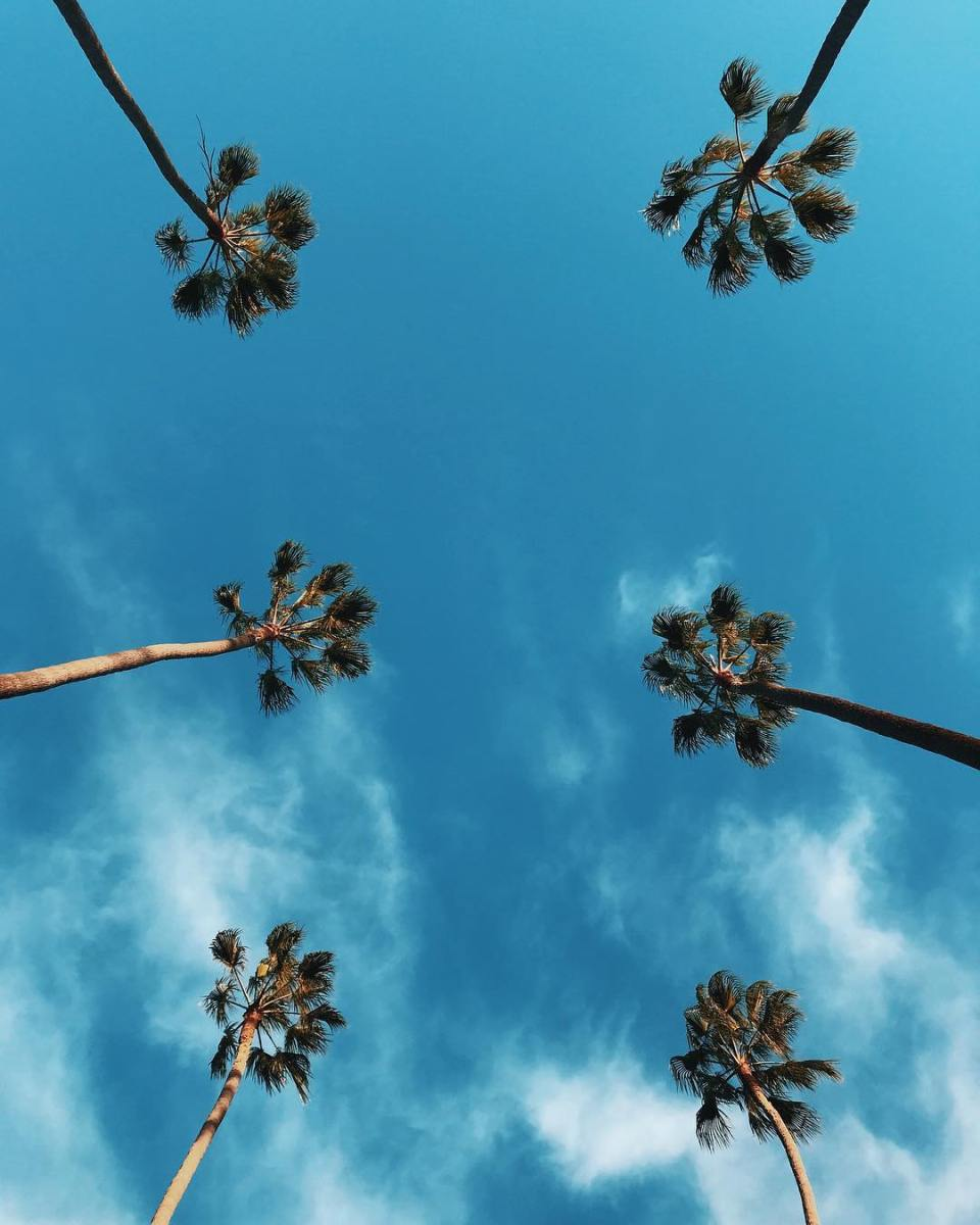 Palm Trees in Beverly Hills