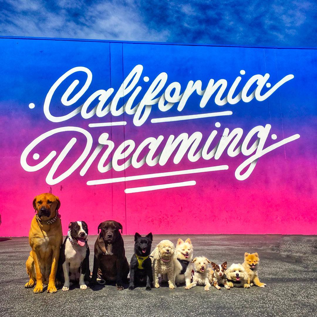 California Dreaming Wall