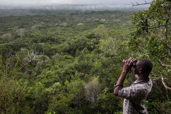 Arabuko Sokoke Forest - Foresta di Arabuko Sokoke